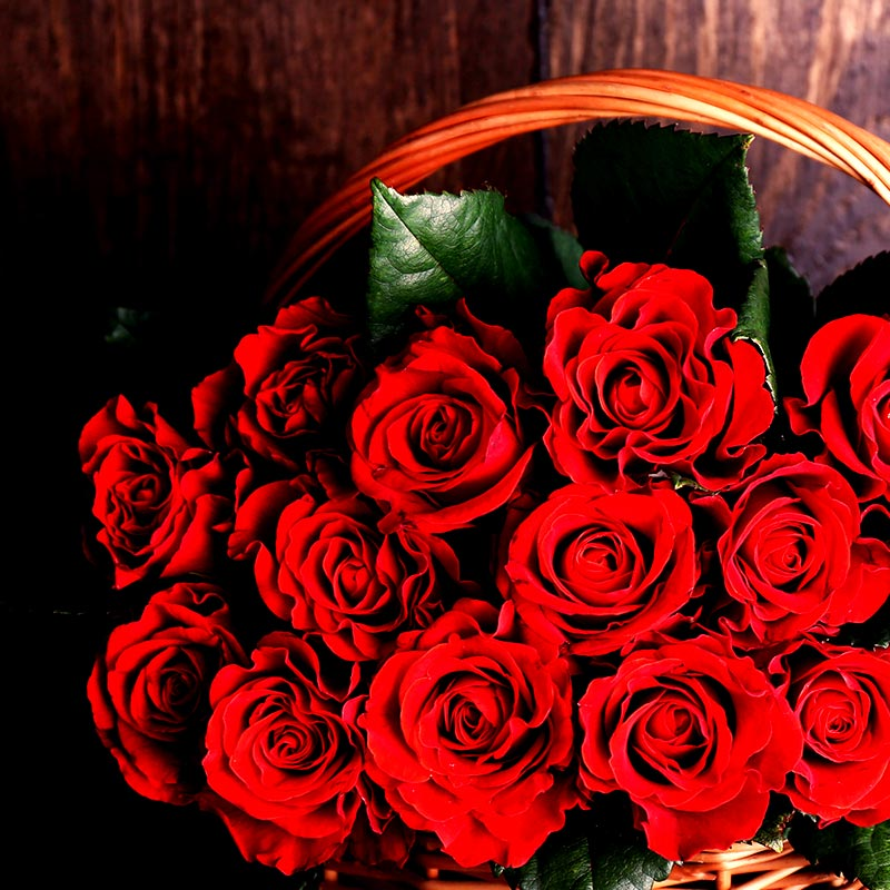 Rosen Heilige Elisabeth