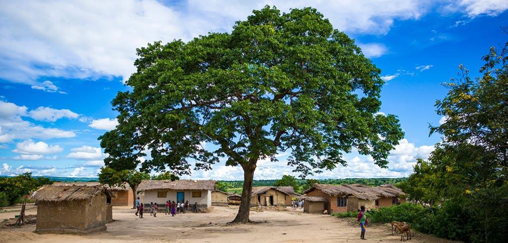 Versammlungsbaum in Kaphatika Malawi