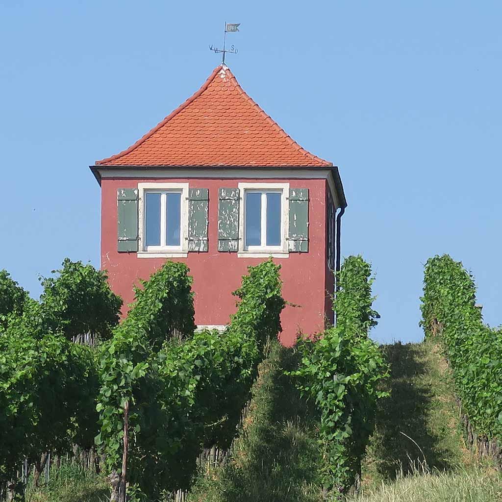 Weinberg beim Schloss Hersberg der Pallottiner