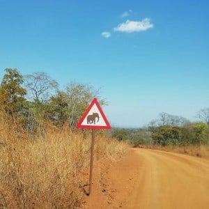 Vorsicht Elefanten - Kasungu Nationalpark