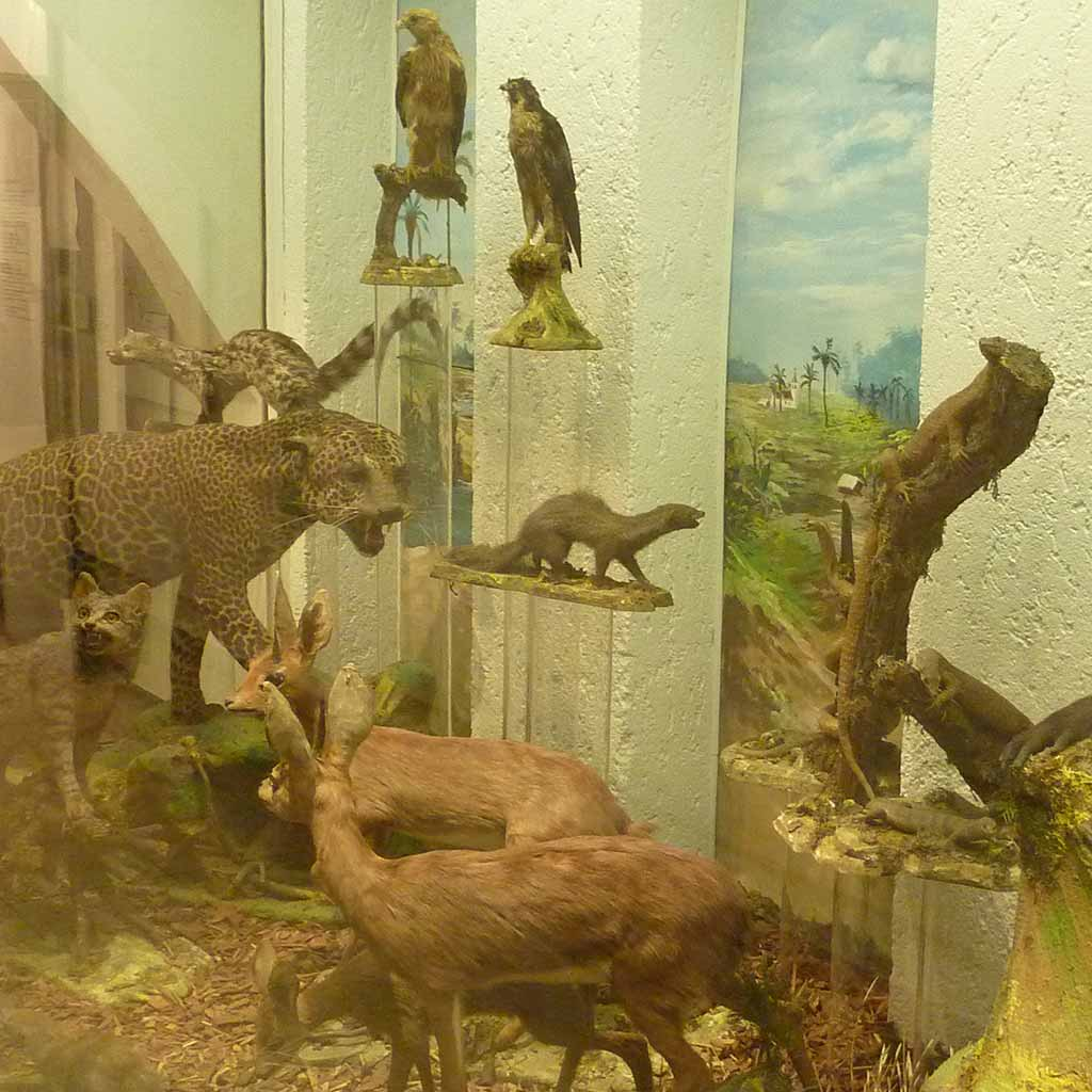 Exotische Tiere im Missionsmuseum der Pallottiner in Limburg